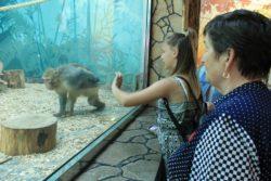 Экскурсия в Белгородский зоопарк