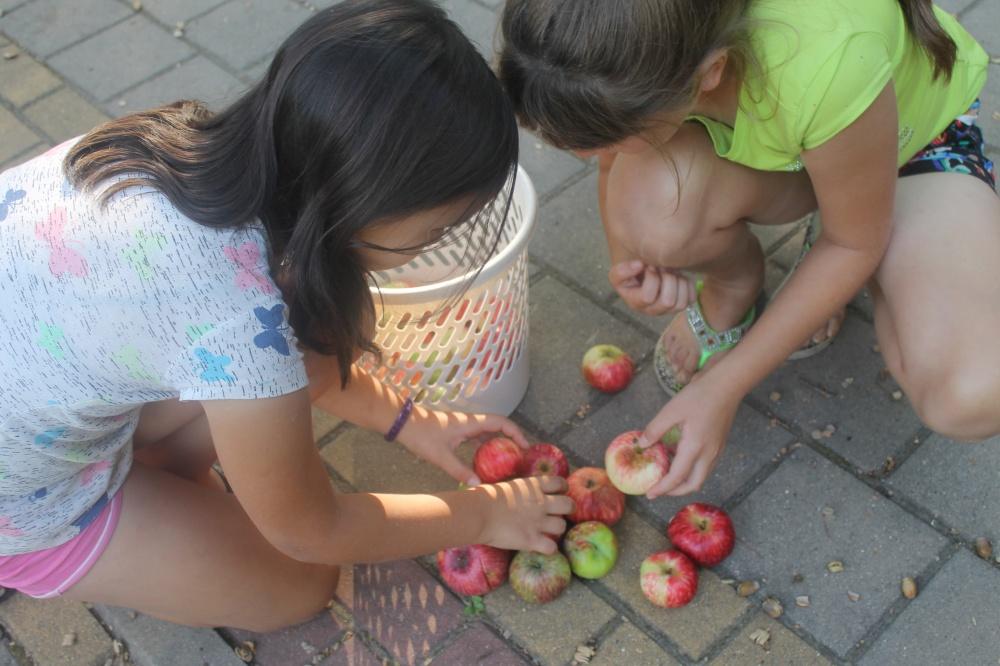 «Яблочный, ореховый, медовый»