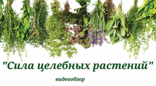 «Сила целебных растений»